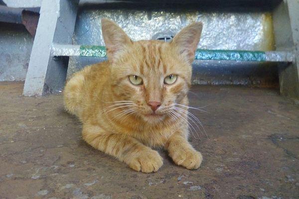 Любимец севастопольских моряков кот Боцман на полгода сбежал в Сирию кот, боцман, корабельный кот, Севастополь, Сирия, длиннопост