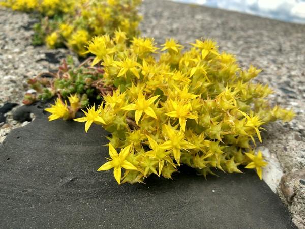Просто цветущий мох фотография, мох, Природа