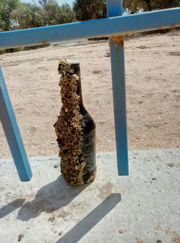 Бутылка в море Бутылка, Море, Мусор, Кораллы, Трипофобия