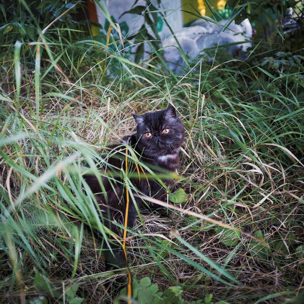 Хороший день кота пельменя... кот, кошки и котята, Няша, Животные, котомафия