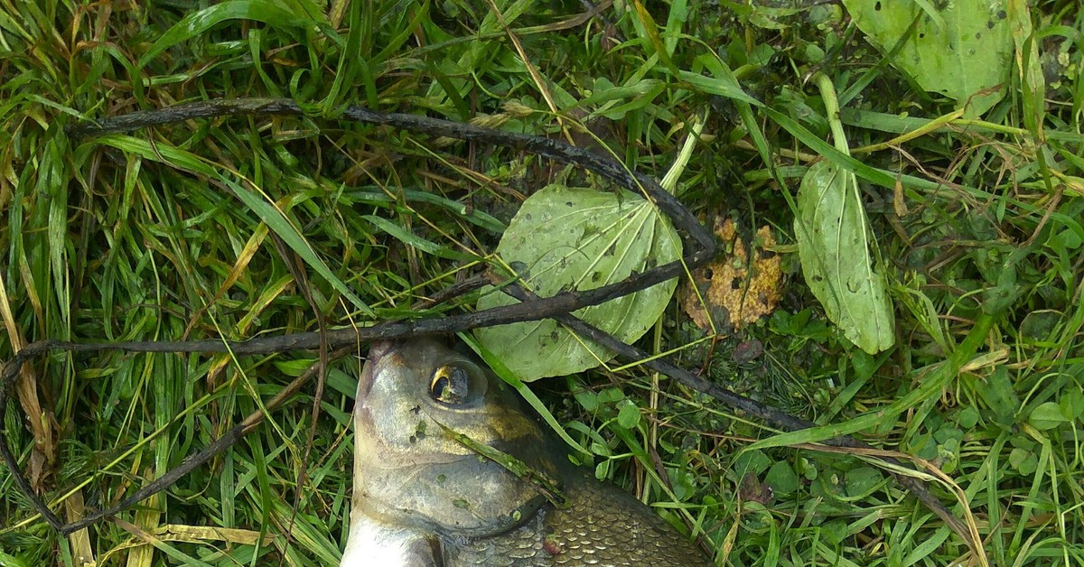 Старица москва реки рыбалка
