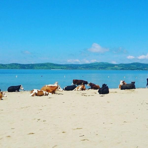 Пляж море обнаженные тела — photo 8