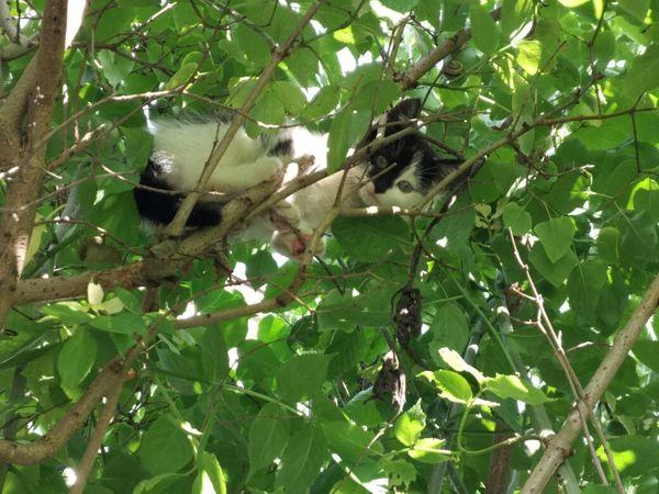 Калининград, помогите, пожалуйста, котёнку! Помощь, Кот, Калининград, Котомафия