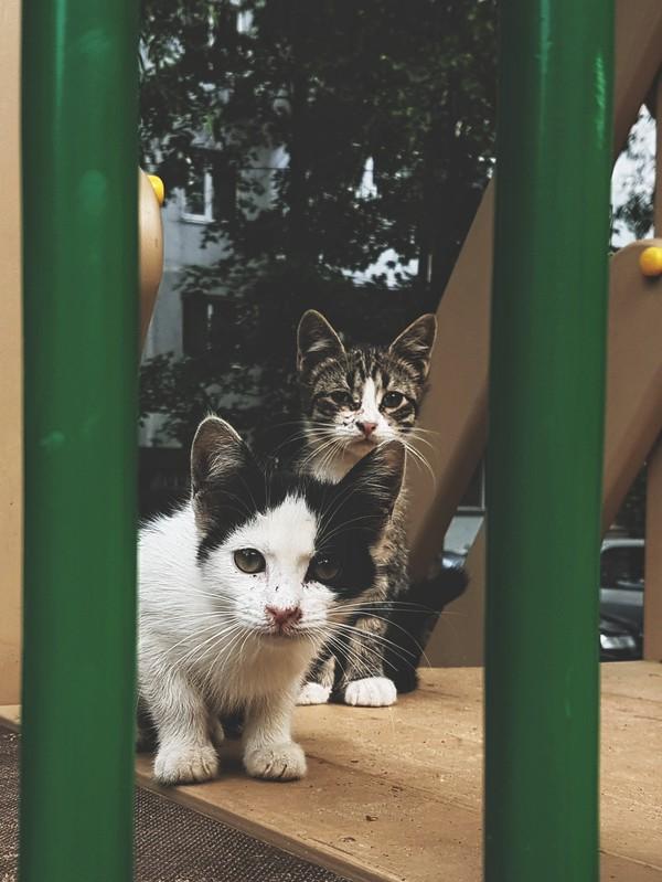 Бродяги. кот, Лига Добра, samsung galaxy s7