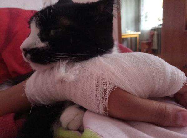 Лечит кот, Рука, Бывает