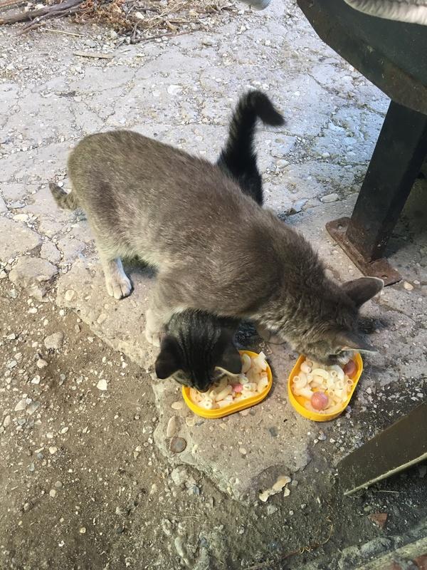 Дачное дача, кот, длиннопост