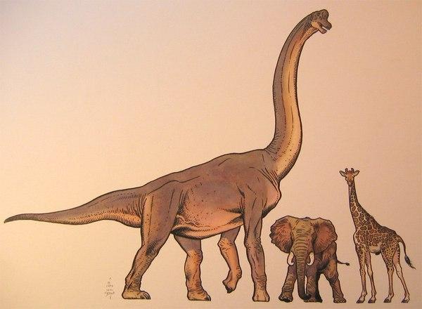 Пустоголовые зауроподы. динозавры, Эволюция, Интересное, палеонтология, млекопитающие, видео, гифка, длиннопост