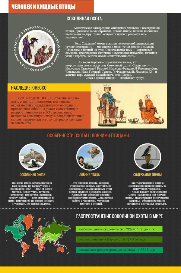 Инфографика о соколиной охоте. соколиная охота, инфографика, сокол, длиннопост