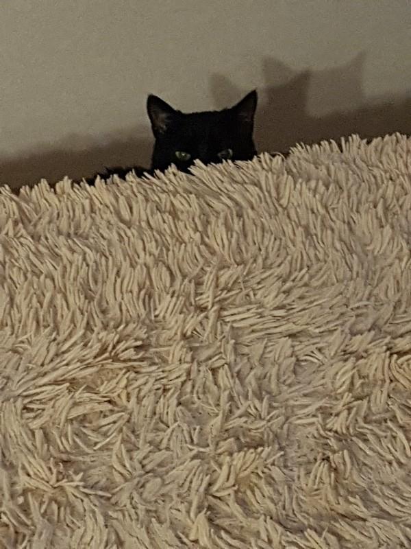Котозло кот, зло