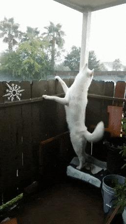 Собака просто обожает дождь Собака, Дождь, Счастье, Балдеж, 9GAG, Милота, Гифка