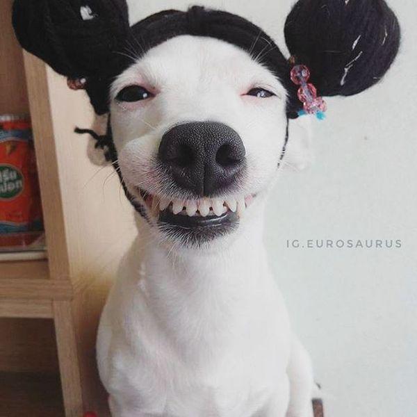 Заразительная улыбка этой собаки не оставит вас равнодушным улыбка, Собака, длиннопост