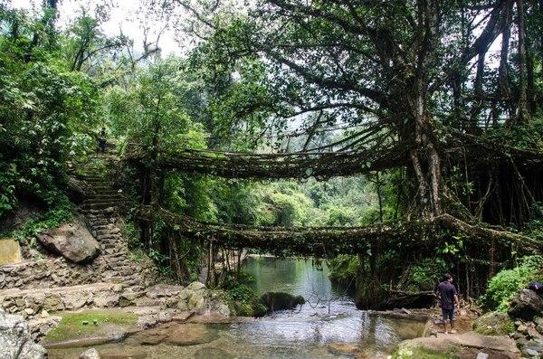 Когда мосты не строят, а выращивают World of building, Сооружения, Архитектура, Строительство, Интересное, Познавательно, Мост, Индия