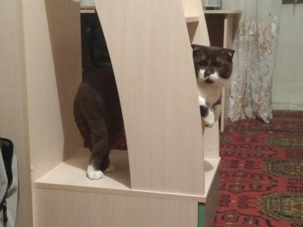 Когда твой котэ решил пешком постоять.