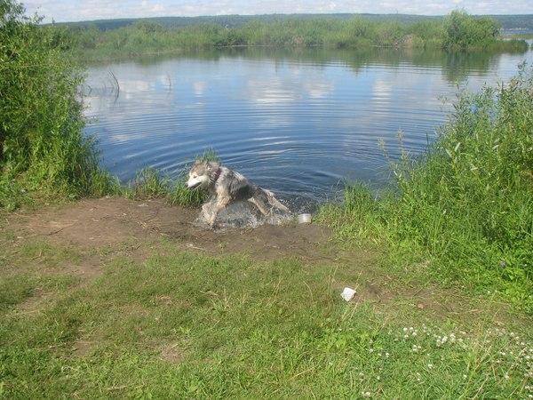 Когда кто то в воде дотронулся до лапы ))))