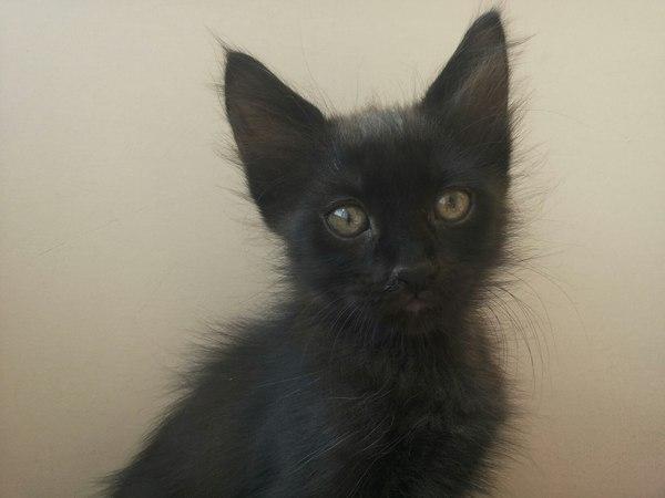 Котята ищут дом. Краснодар Кот, В добрые руки, Помощь животным, Спасение животных, Сила Пикабу, Длиннопост