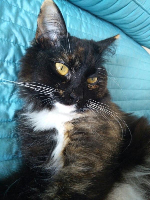 Котик. Котики:3, Кот