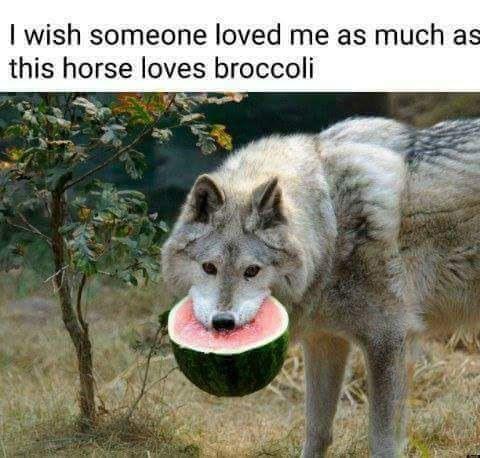 Странная любовь 9gag, Волк, арбуз, forever alone