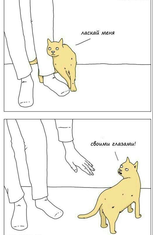 Погладь котика)