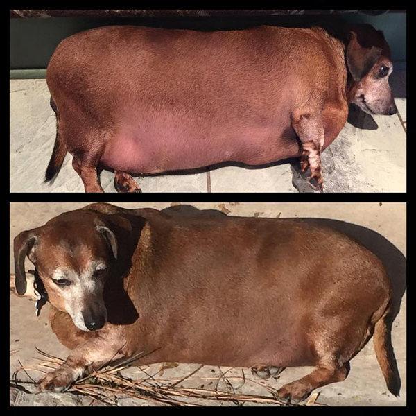 История одного похудания. Собака, США, Преображение, Длиннопост