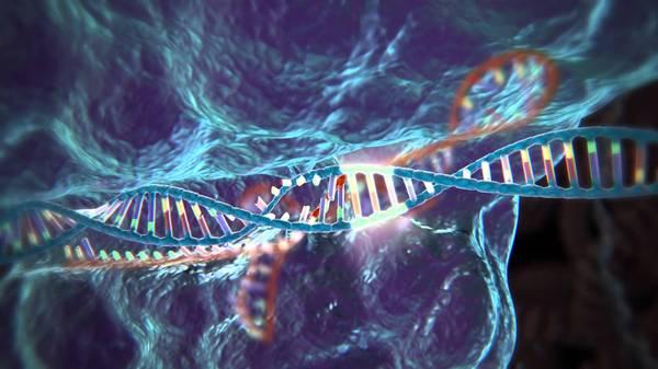 Ученые США впервые отредактировали гены человеческих эмбрионов Днк, Наука, Эмбрион, Евгеника