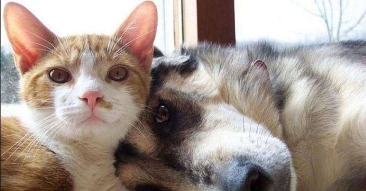 Картинки спящими, картинки приколы кошки и собаки