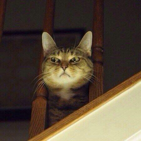 Я наблюдаю за вами... кот, взгляд, что-то подозревает