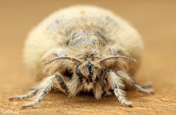 Когда тебе говорят, что скоро ты из гусеницы превратишься в прекрасную бабочку бабочка, Насекомые, Животные, Природа, юмор, бэтмен, ну или почти, длиннопост