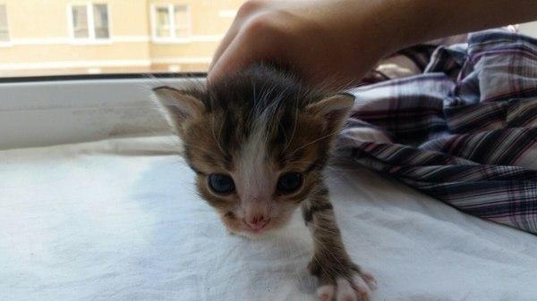 Отдам котеночка. Самара длиннопост, отдам, отдам в хорошие руки, кот, котенок ищет семью, потеряшка, Лига Добра, помощь животным