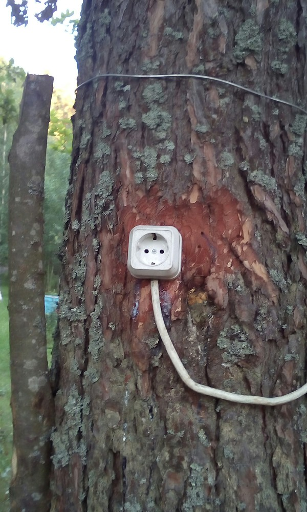 Лесное электричество электричество, дерево, розетка