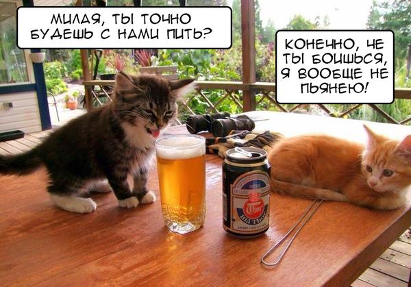 Когда твоя девушка решила выпить с тобой и друзьями Алкоголь, Кот, Девушки, Гифка