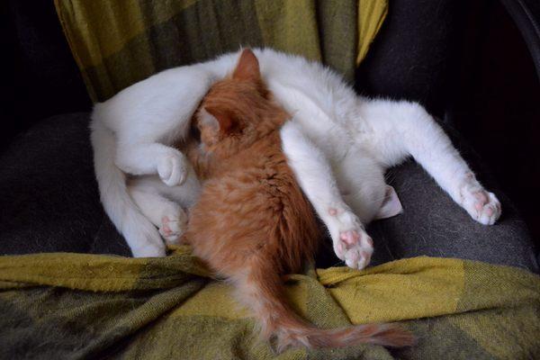 сын проснулся и увидел спяшую маму