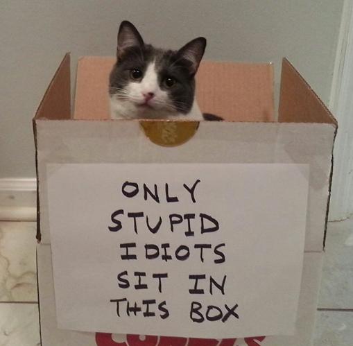 Ловушка сработала Кот, Ловушка для кота, Reddit