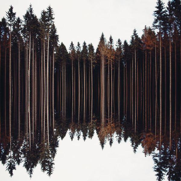 Лесные просторы лес, деревья, отражение, Природа, photoshop