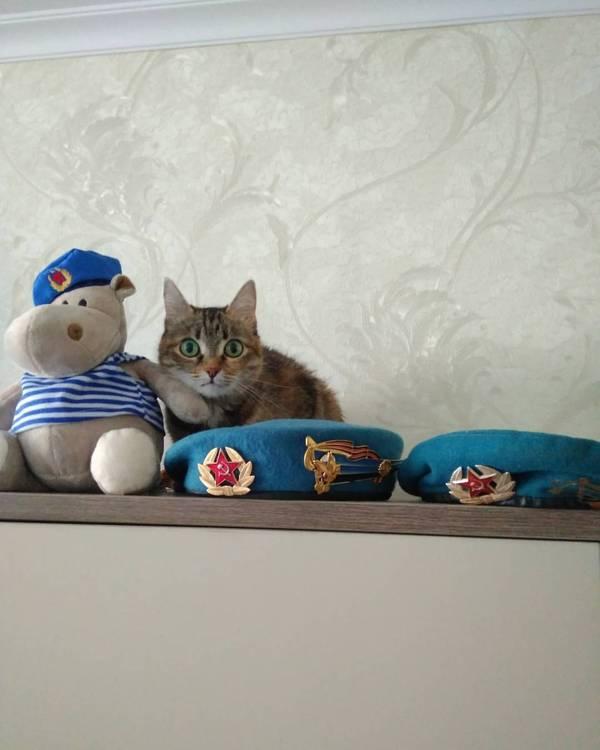 С праздником! С Днем ВДВ! Кот, ВДВ, День ВДВ, Бегемотя