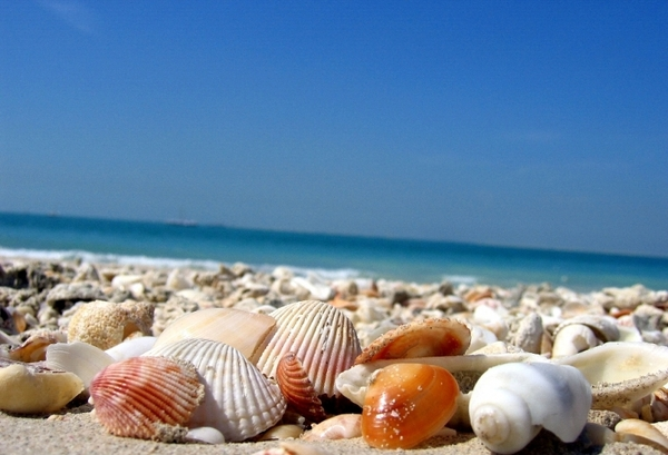 В июне Русские туристы в Арабских Эмиратах прогнали с пляжа украинцев песней... Украина, Россия, песня, хамство