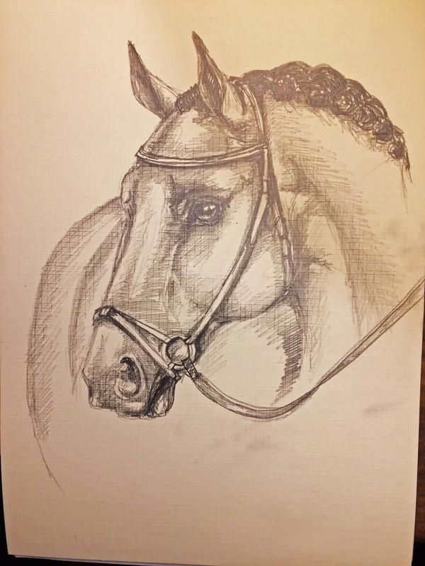 Лошади. Рисунки любителя. лошадь, рисунок карандашом, цифровой рисунок, набросок, рисунок, длиннопост