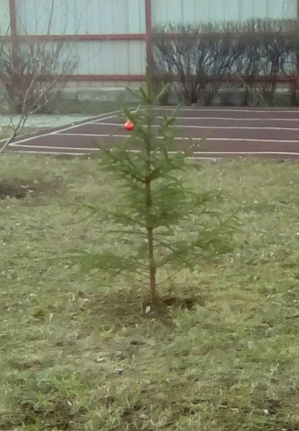 У кого-то ещё Новый год... В детском саду стоит вот такое чудо)))