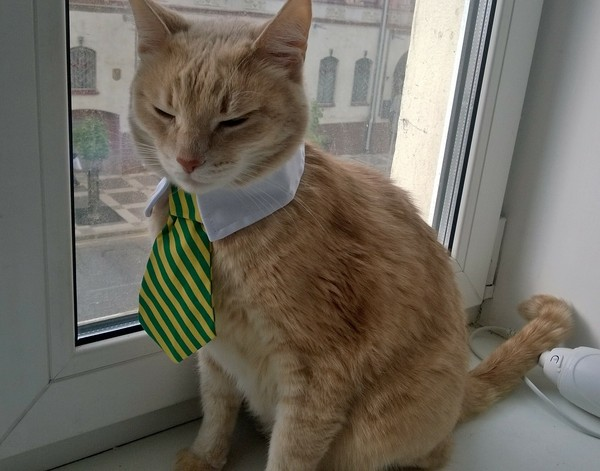 Загулявший кот кот, потеряшка, Помощь