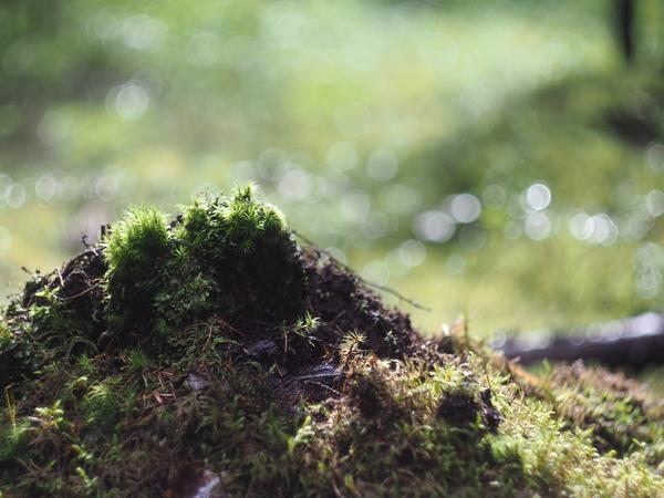 Фото с лужайки грибы, Ленинградская область, подборка фотографий, фотография, длиннопост