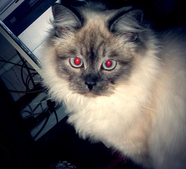 Дымок кот, грусть, фотография
