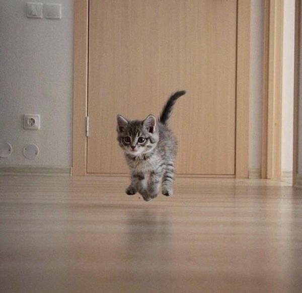 Полёт кота