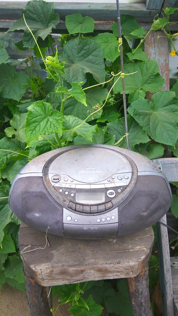 Когда ты огурец, но тоже хочешь послушать свою любимую радиостанцию