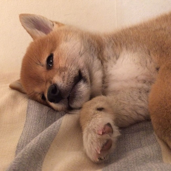 Рыжий Собака, щенки, милота, с просторов