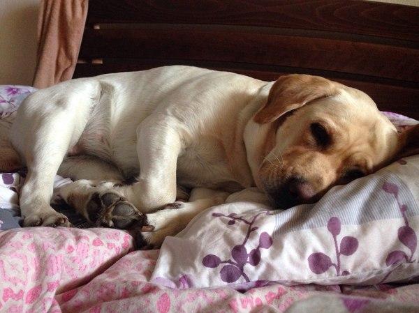 Настоящий друг Собака, Болезнь, лучший друг