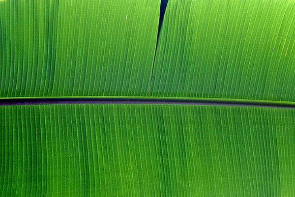 Лист банана (оптическая иллюзия)