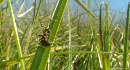 Несоблюдение ТБ насекомые, питание, падение, трава, гифка