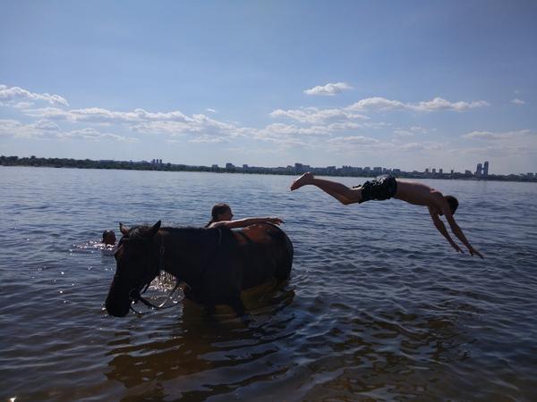 Лошадь-лучший друг! лошадь, Друзья, Бурушка, Волгоград