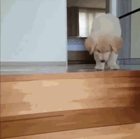 Собака отдыхака