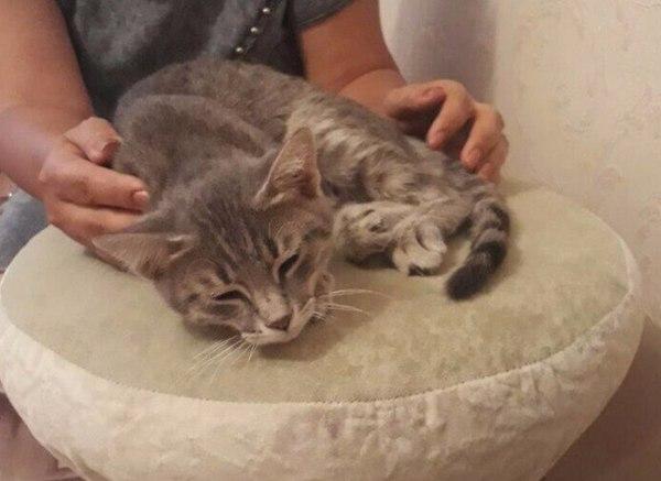 Кошечка в добрые руки. Алматы кот, в добрые руки, помощь животным, алматы, длиннопост
