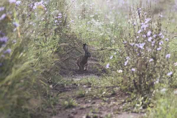 Мой первый заяц :) заяц, фотография, Природа